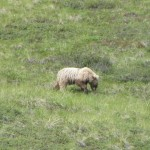 And even another bear, this one pretty close.