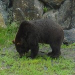 Another shot of a bear.