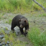 Bear at AWCC.
