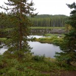 This is a beaver pond where I caught one tiny rainbow trout.
