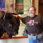 A full mount of a buffalo they allow touching.
